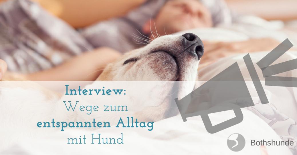 Wege zum entspannten Alltag mit Hund