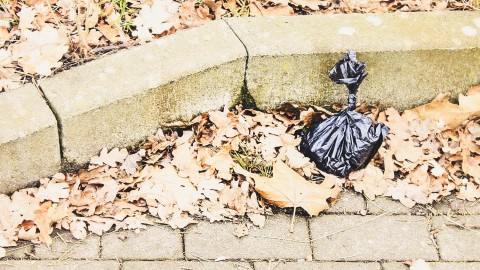 Spieglein, Spieglein an der Wand, wer ist der nachhaltigste Kotbeutel im ganzen Land? {inkl. Kotbeutel Checkliste}