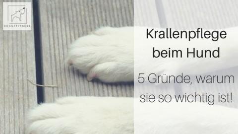 Krallenpflege bei Hund – 5 Gründe warum sie so wichtig ist!