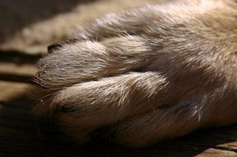 Krallenschneiden beim Hund – warum es so wichtig ist