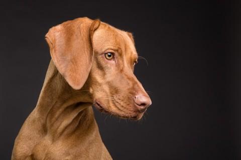 Kreuzbandriss beim Hund – Symptome, Diagnose & Behandlungsmöglichkeiten