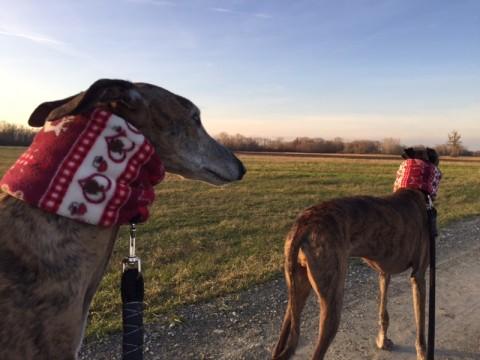 Weihnachts – DIY – Loop für den Hund