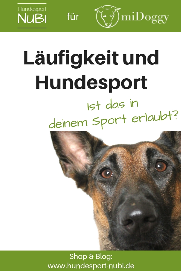 Läufige Hündin, Läufigkeit im Hundetraining - Hundeblog Hundesport Nubi
