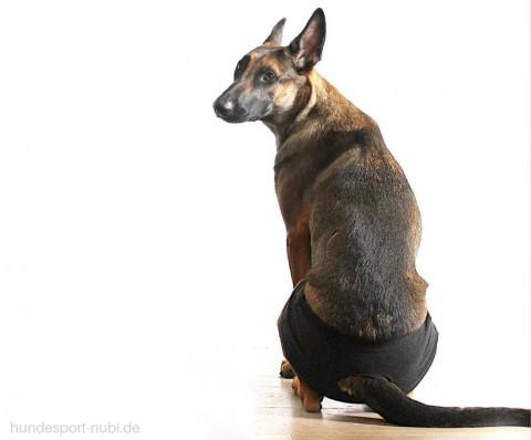 Darf die läufige Hündin mit auf den Hundeplatz? | Sport und Training während der Läufigkeit