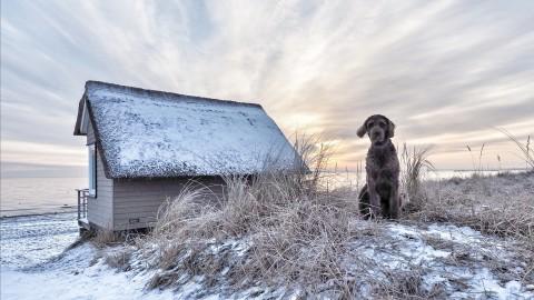 Lübecker Bucht mit Hund: Winterreise an die Ostsee