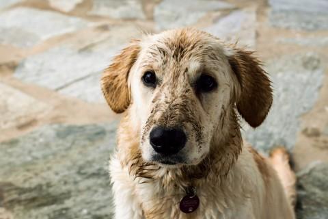 Green Dog Hundehaltung #2: Pflegeprodukte