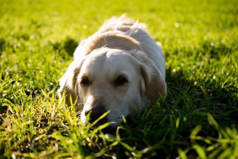 """Green Dog Hundehaltung: Lill´s Weg zum """"Green Dog"""""""