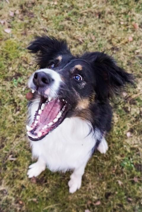 Hilfe, mein Hund ist hyperaktiv! Impulskontrolle kann man trainieren!