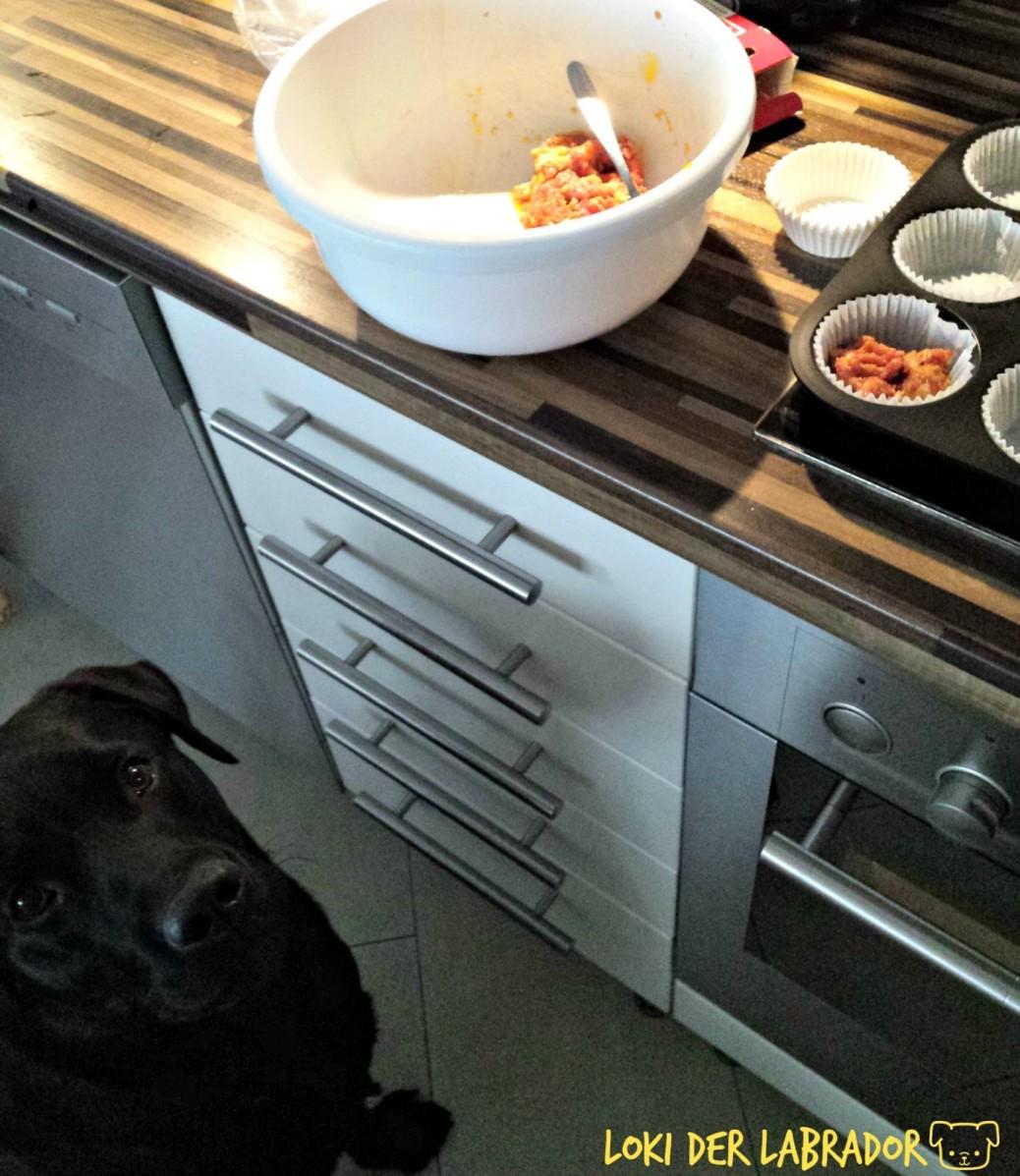 Labrador Muffin für Hunde