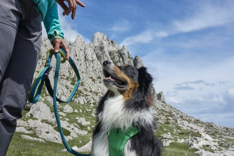 Wandern mit Hund Ausrüstungstipp: Die passende Leine