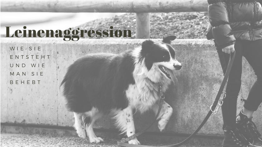 Leinenaggression beheben