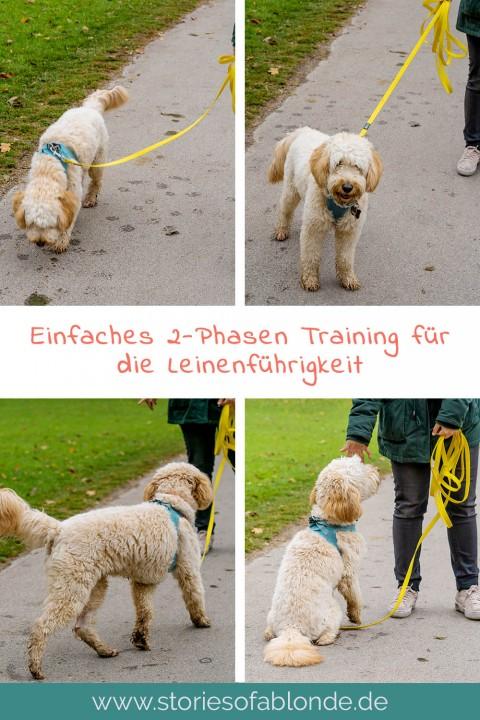 Richtig Gassi gehen: Leinenführigkeit beim Hund