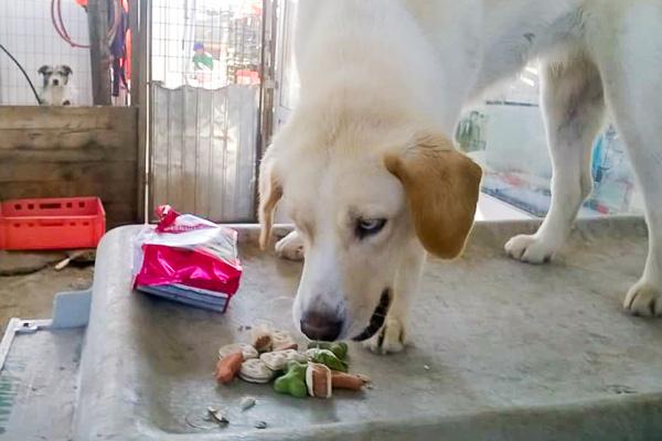 Ein Hund aus dem Tierheim Erfahrungsbericht