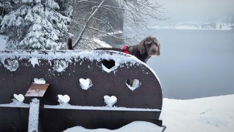 Winterwandern im Harz: Glückstreffer gelandet auf dem Liebesbankweg