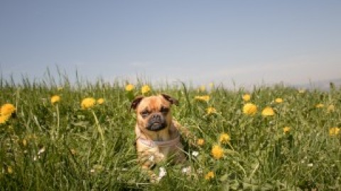 Lieblings Links für den Frühling