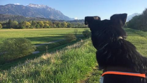 Liechtenstein mit Hund