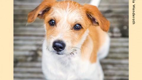 Lifehacks Hund: Die besten Kniffe für den Alltag [Anzeige]