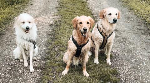 """Stress bei Hundebegegnungen: """"Komm Maus, wir schaffen das!"""""""