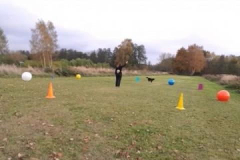 Kreatives Longieren in Kombination mit Tricks und Treibball