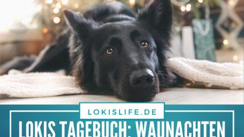 Lokis Tagebuch Waunachten (28. Dezember 2019)