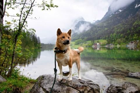 Roadtrip nach Österreich und Südtirol mit Hunden