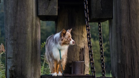 Ein Buch für die Hundefotografie