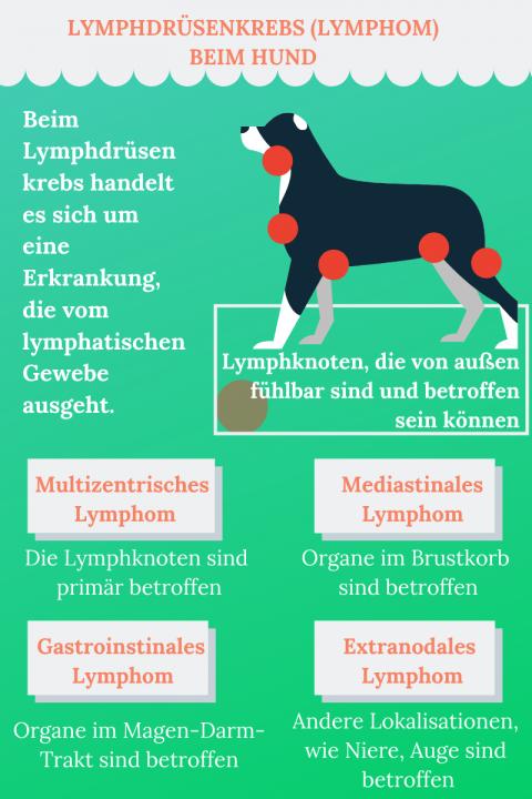 Lymphdrüsenkrebs beim Hund