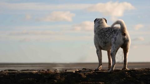 4 wichtige Tipps für Tierbilder am Strand