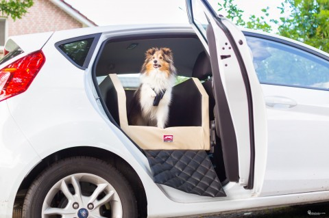 [Produkttest – Dogstyler] wie sicher fährt dein Hund im Auto?
