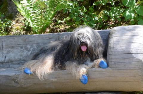 Wandern mit Handicap-Hunden? Wie das geht, erzählen die Besitzer