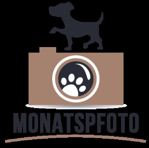 Monatspfoto August 2017