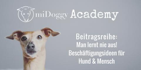 Man lernt nie aus! – Beschäftigungsideen für Hund & Mensch [+kostenlosen Trainingsplan]