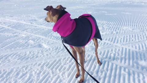 3 Gründe, warum euer Hund einen Mantel tragen sollte [Anzeige]