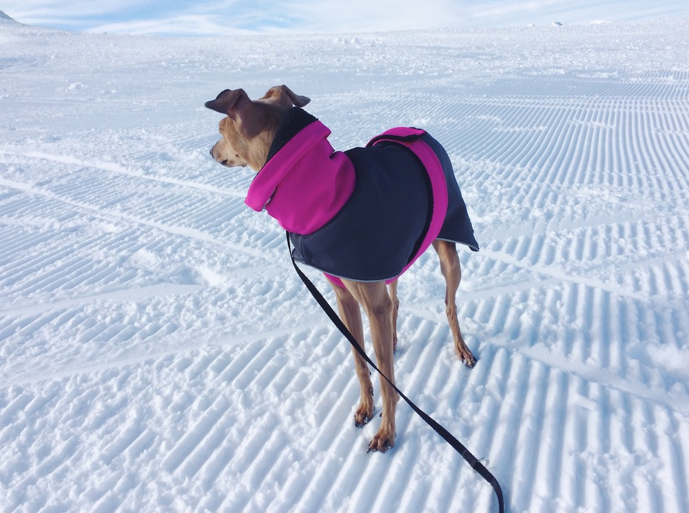 Mantel fuer den Hund