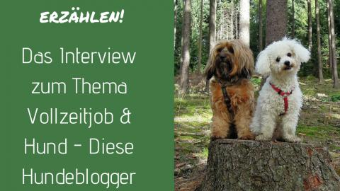 Die besten Tipps zum Thema Karriere & Hund