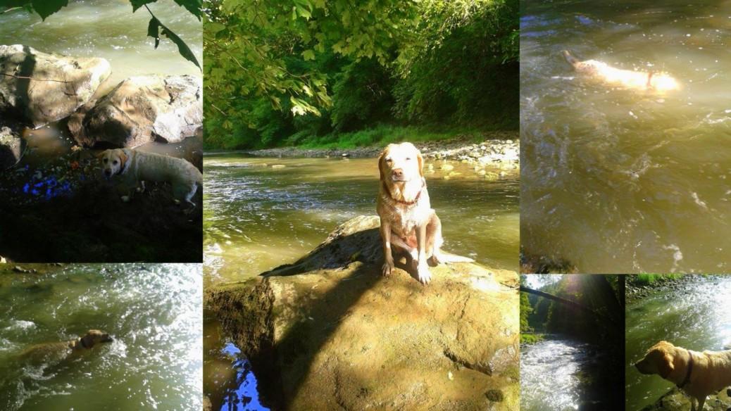 Spaziergang mit Hund Neckar