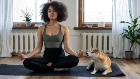Meditation mit Hund