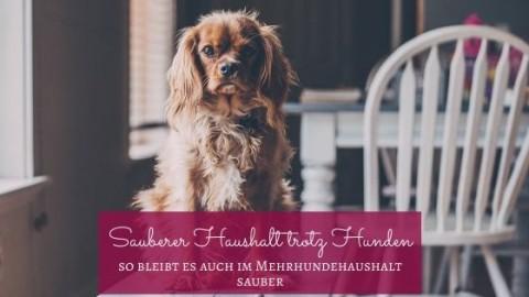 Sauberer Haushalt trotz Hund(e)
