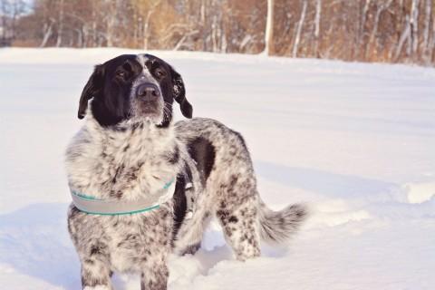 Kleiner Ratgeber Wintersport mit Hund – Teil 3: Wintersportarten für Vierbeiner