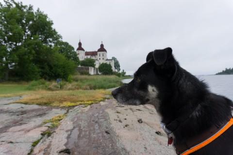 Mit Hund durch Schweden: Roadtrip Teil 2