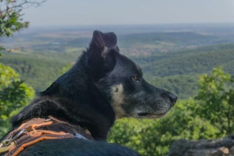 Répáshuta: Das Dorf der bellenden Hunde