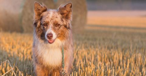 Zen Dog – Entspannt an der Leine