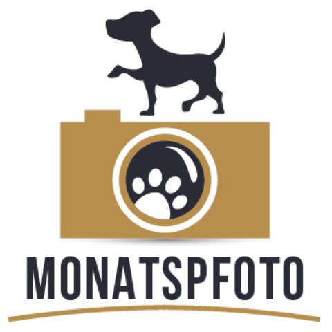 Monats(p)Foto [April]