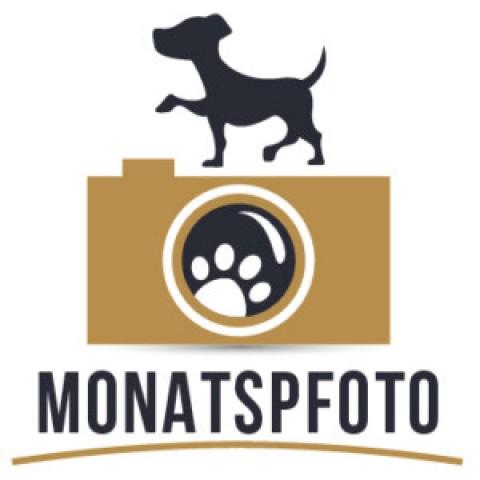 Monatspfoto [Streetstyle]