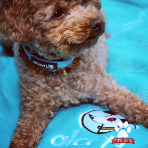 Outdoor Hundedecke – Alcott Adventures