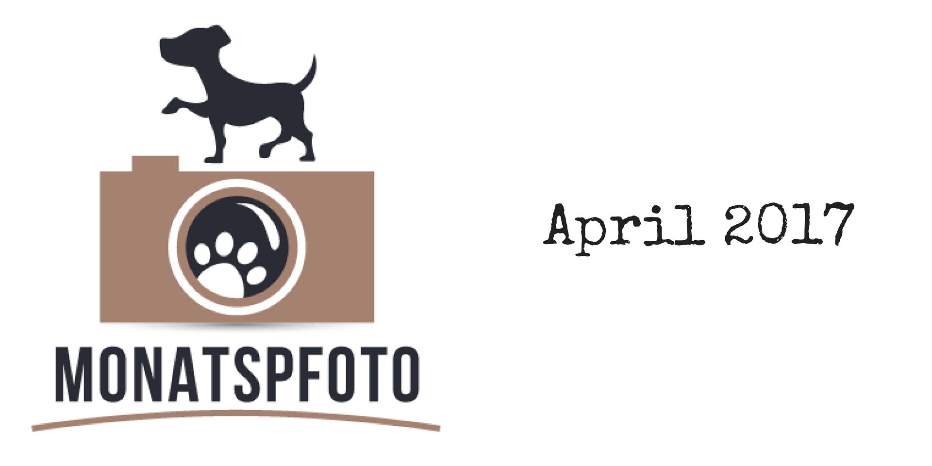 Monatspfoto April 2017 miDoggy Blog Community für Hunde
