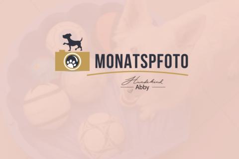 MONATSPFOTO AUGUST – HUNDEOLYMPIADE