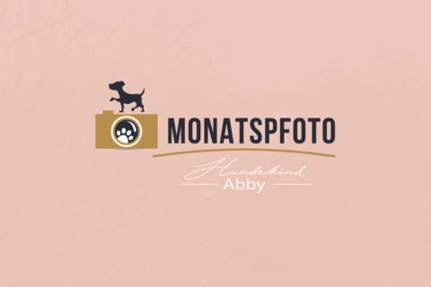 MONATSPFOTO JULI