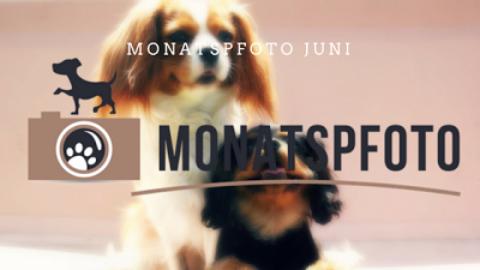Monatspfoto Juni: Da liegt etwas in der Luft..