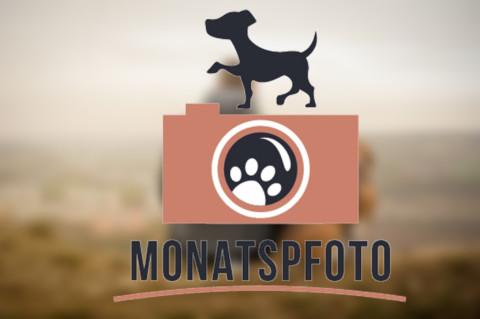 Monatspfoto | November